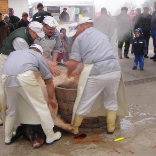 Schlachtfest am 19.02.2011